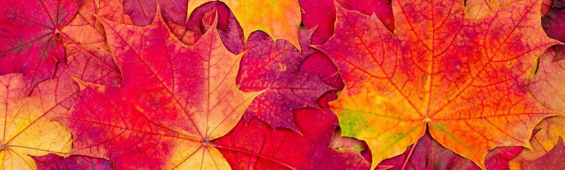 Late Autumn Show
